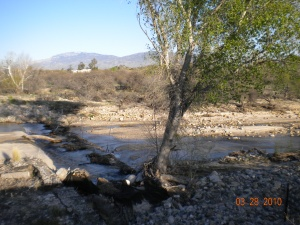 small creek in the desert