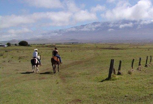 cowboys in hawaii